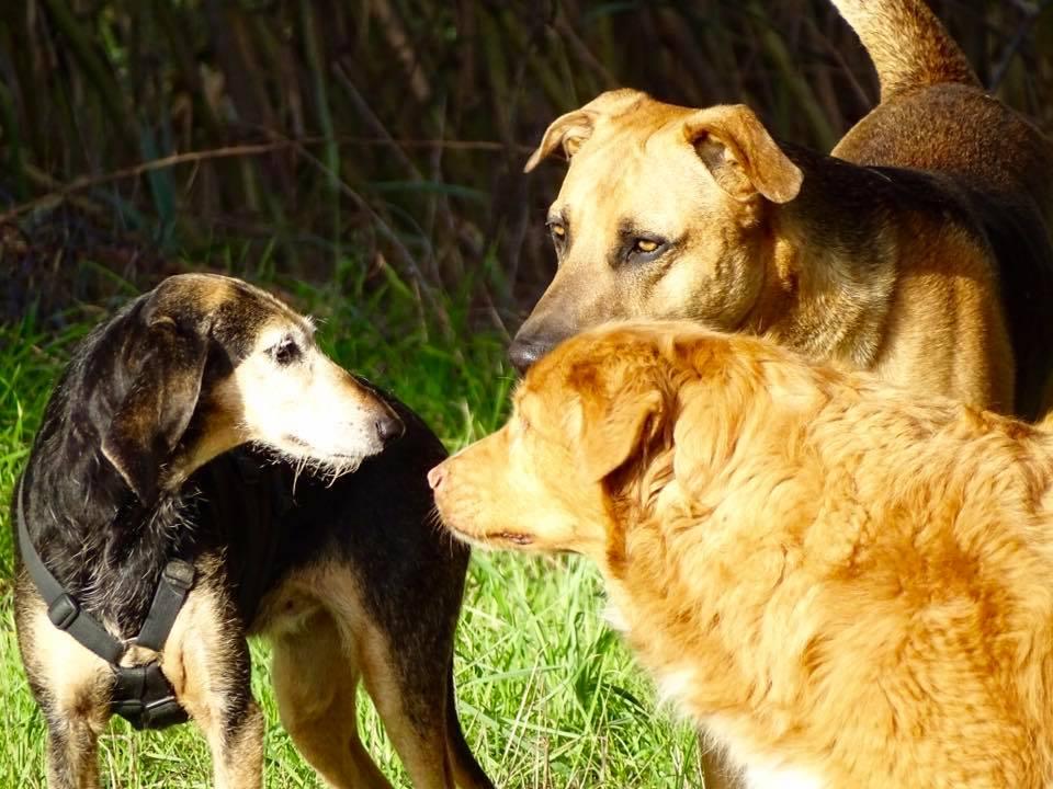 L'importanza del ruolo fra i cani