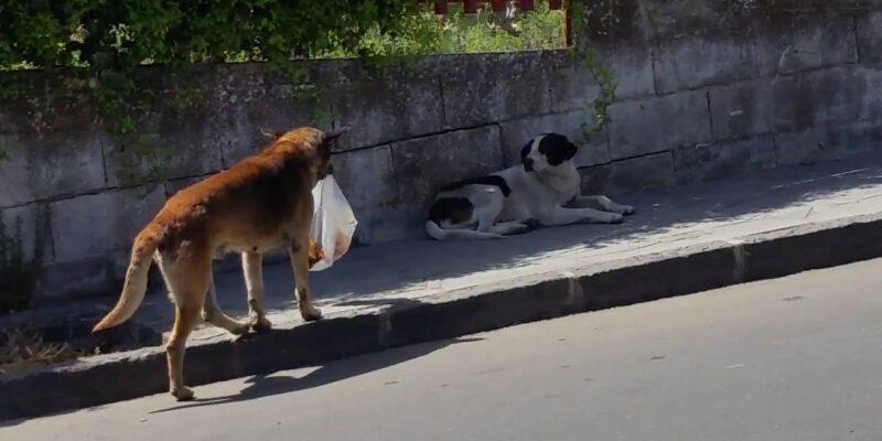 L'intelligenza sprecata del cane - di Veronica Papa